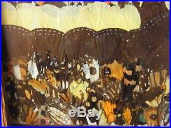 Butterfly Wing Painting Mosaic Collage Art Framed Hawaii Tzeng Dang Wei Taiwan