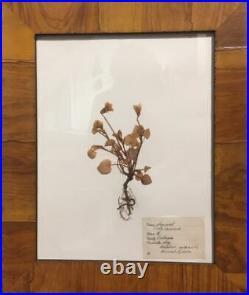 Vintage Pressed Flowers from Sweden framed antique botanical